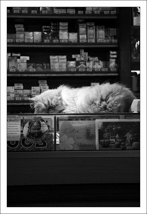 http://anakronik0.free.fr/Photos/Les_Arcades/IMG_05.jpg